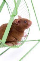 Instrucciones de Hamster Jaula