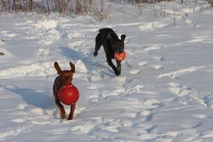 Cómo hacer lana hervida Juguetes para perros