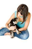 Diferencias entre la infección por estafilococos de un perro y tiña