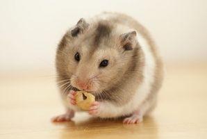 Alimentos que no deben comer hámsters