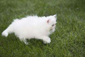 Cuando se come un gato a un ratón Qué se Swallow los huesos?