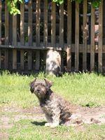 Cómo arreglar una cerca Así que un perro no puede saltar sobre ella
