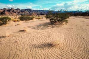 Datos único sobre el desierto de Mojave