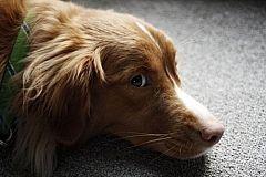 Cómo neutralizar el olor de la orina del perro