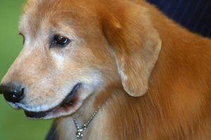 Remedios caseros para perros con cáncer