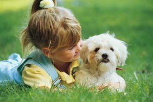 La mejor manera de limpiar manchas de lágrimas para perros