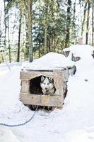 Cómo construir una cubierta exterior de la perrera