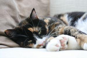 Cómo quitar el pelo del gato de los muebles y Tapetes