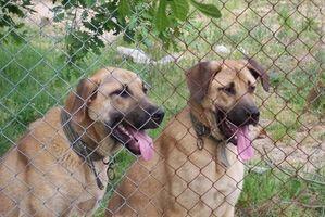 Los mejores perreras para los perros viejos en Maryland