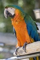Información de aves exóticas