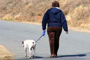 Lo que le sucede a un perro cuando se tiene una convulsión?