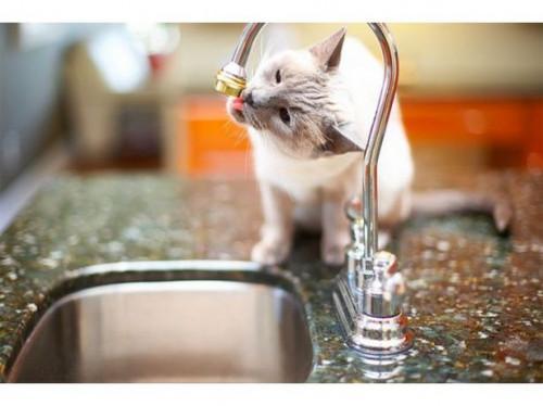 Cómo hacer casera del gato Repelente