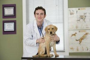 Estado de Florida Recomendaciones para Puppy Vacunas