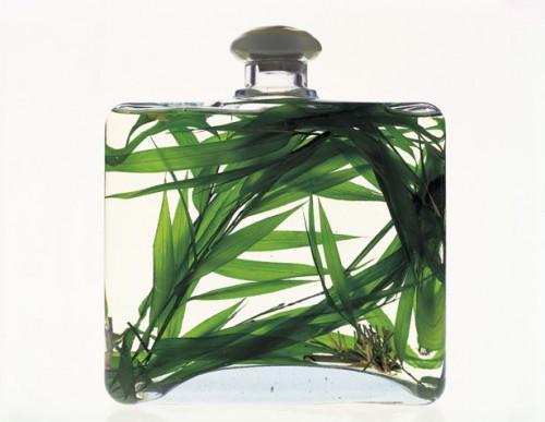 Cómo hacer tu propio Perfumes Naturales, Colonias y rociadores para el cuerpo