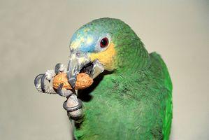 Cómo aclimatar una más antigua del loro del Amazonas a un nuevo hogar