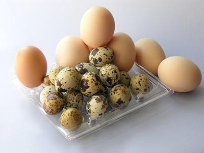 Los huevos de codorniz como alimento