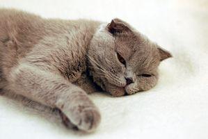 Señales de advertencia de problemas con el estómago de un gato