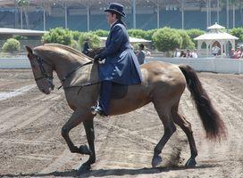 Fundamentos de montar a caballo inglés