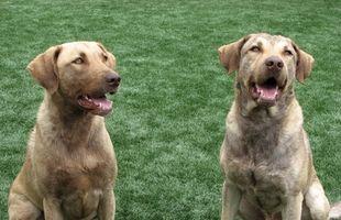 Aceites esenciales para la regeneración nerviosa en los perros