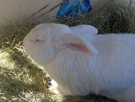 Cómo criar gusanos de pesca y Conejos