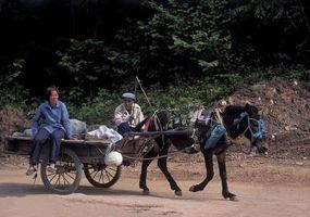 Cómo aprovechar un par de mulas
