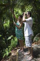 Jungle Escuelas Entrenamiento de supervivencia