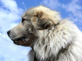 Los tumores de mal olor en los perros
