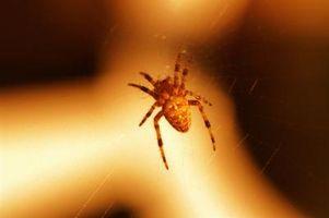 Las arañas venenosas comunes de California