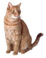 El tratamiento para la sarna Gatos