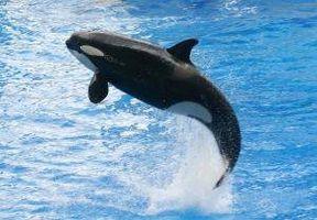 ¿Cómo funciona Beba una ballena?