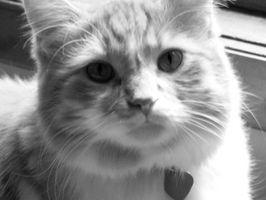 Deshacerse de la orina del gato