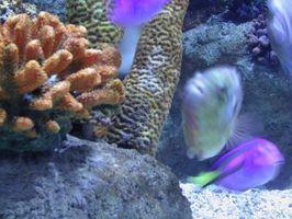 Cómo ancla plantas en un acuario