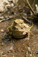 Datos acerca de anfibios y reptiles