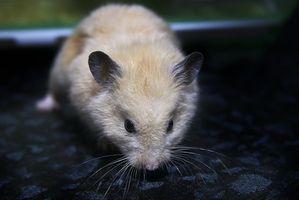 Los estantes de bricolaje para Hamsters