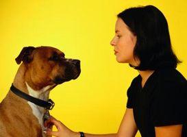 Cómo cuidar a los perros con problemas de la piel