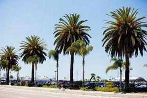 Las cosas que usted debe saber sobre San Diego