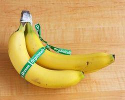 Cómo mantener moscas de la fruta de los plátanos