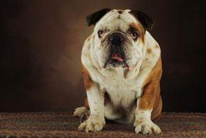 ¿Cómo puedo conseguir un perro para dejar de comer Alfombras de área?