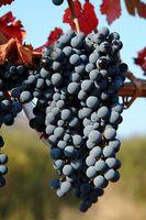 Los mejores lugares para alojarse en la región vinícola de California