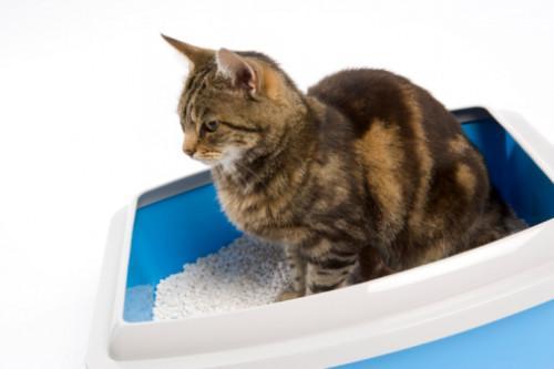 Cómo hacer una caja de arena para gatos hecha en casa