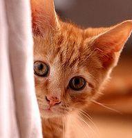 Cómo saber si su gato está enfermo