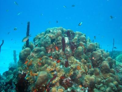Guía de Campo del Indo-Pacífico Coral Reef