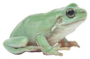 Las adaptaciones de las ranas que viven en estanques