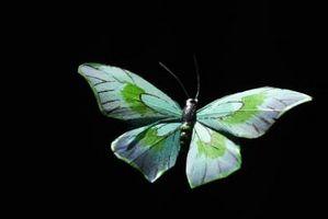 Las cuatro etapas de la metamorfosis de una mariposa