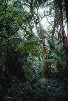 Breve descripción de la selva tropical