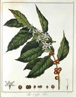 Acerca del café brasileño