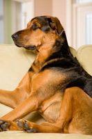 El mejor control de pulgas tópico para perros
