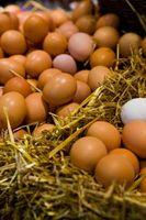 Cómo mantener huevos cocidos frescos