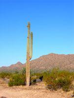 Ofertas Nochevieja paquete de hotel en Phoenix, Arizona