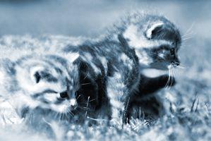 ¿Qué tipo de pulgas medicina le puede dar un gato lactancia materna?